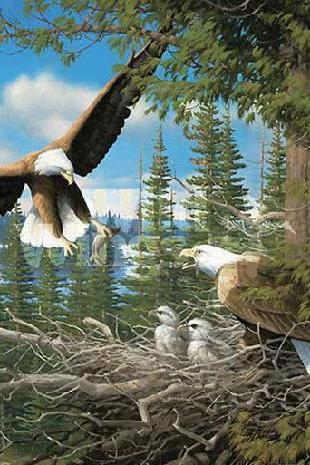 Unique Hand Made pdf Sewing Home Patterns Dmc Hand Made Crafts Spring Bald Eagles Cross Stitch Pattern***LOOK***