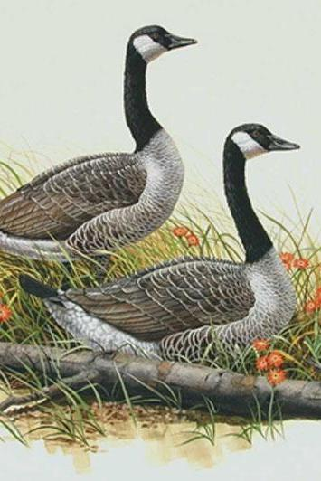 CRAFTS Canada Geese Cross Stitch Pattern***LOOK***