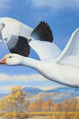 CRAFTS Pair Of Lesser Snow Geese Cross Stitch Pattern***LOOK***