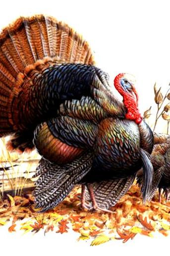 CRAFTS Wild Turkey Pair Cross Stitch Pattern***LOOK***