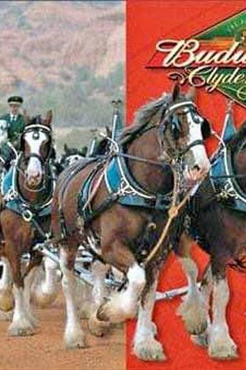 CRAFTS Budweiser Clydesdales Cross Stitch Pattern ***LOOK***Buyers Can Download Your Pattern As Soon As They Complete The Purchase